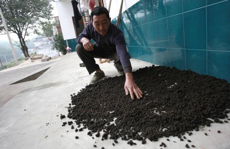 Chinese Poop Water