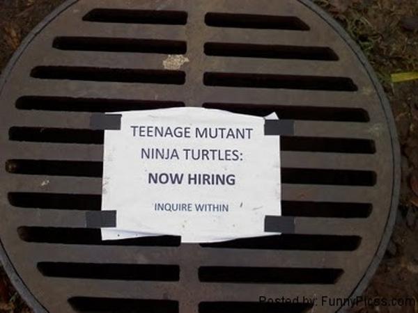 teenage-mutant-ninja-turtles-are-looking-for-help