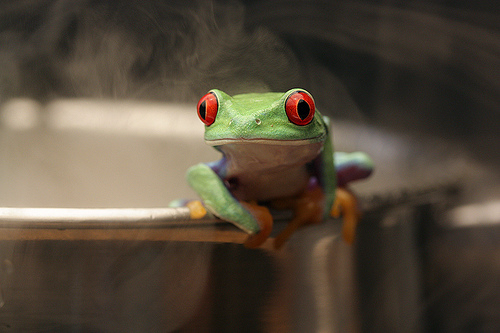 frog-water
